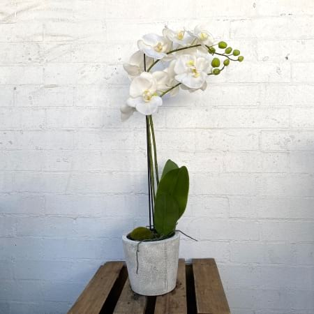 White Orchid double stem (artificial)