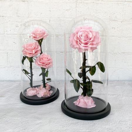Belle Everlasting Rose